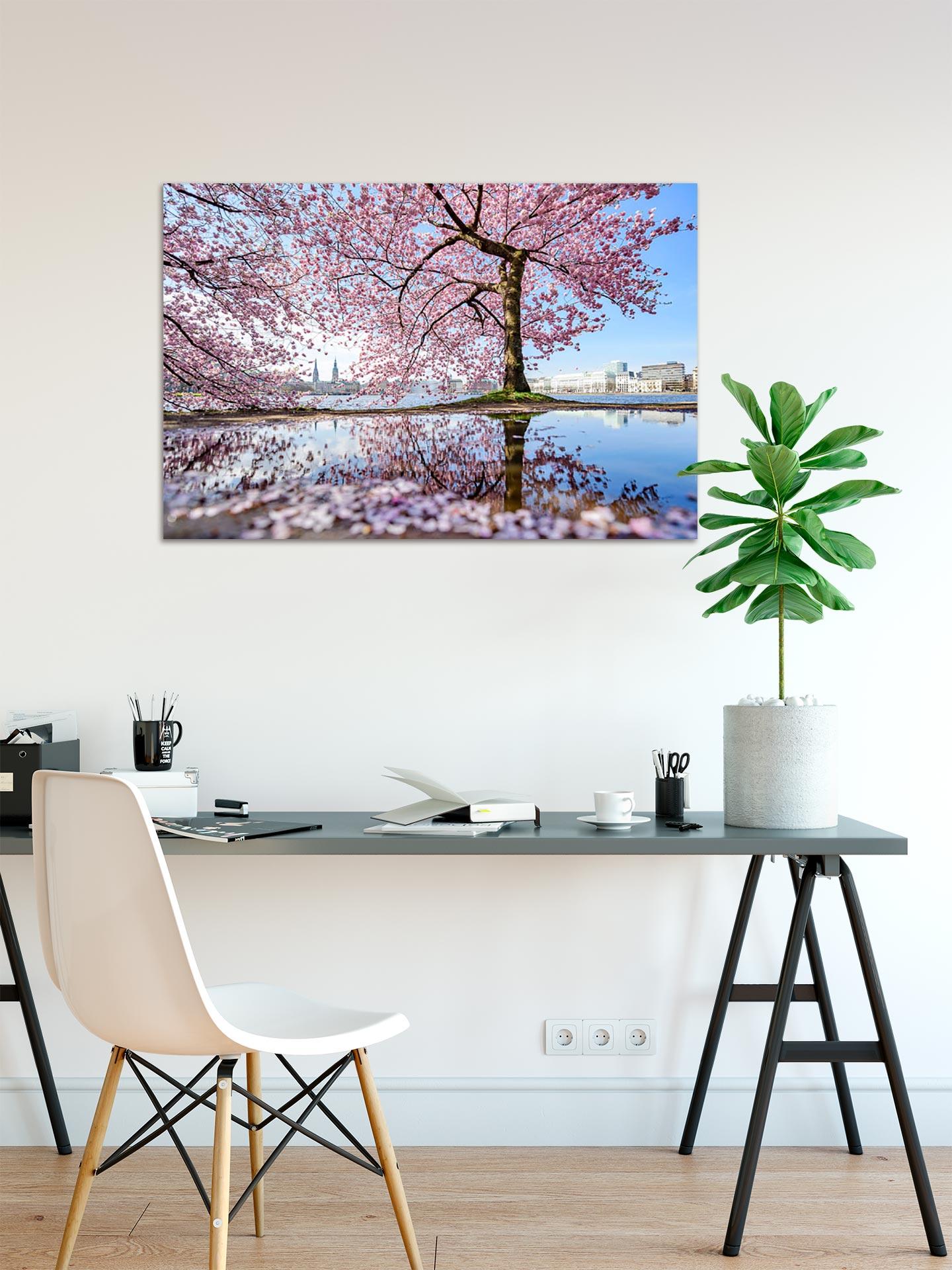 NL069-alster-fruehling-kirschbluete-hamburg-wandbild-auf-leinwand-acrylglas-aludibond-arbeitszimmer