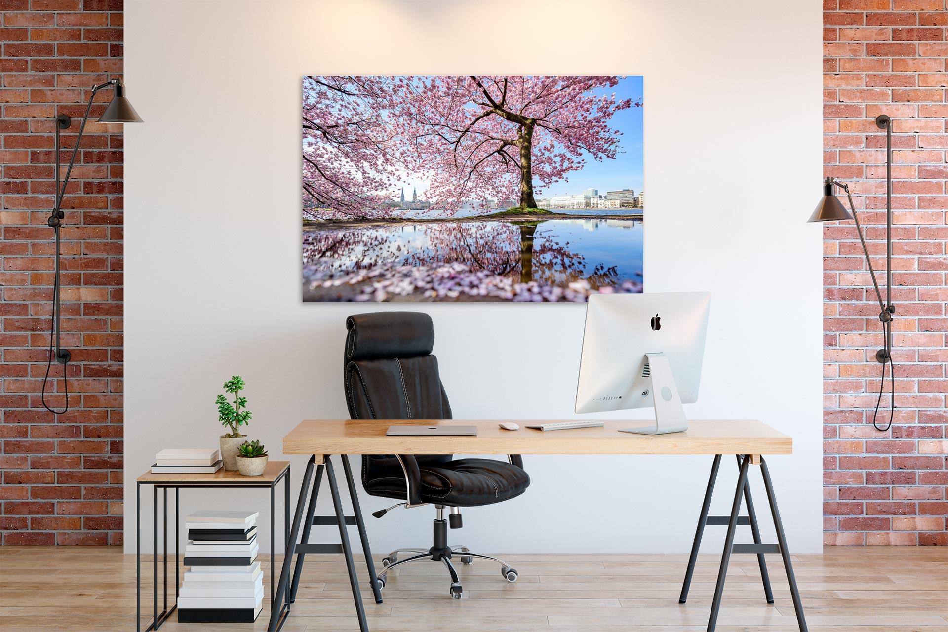 NL069-alster-fruehling-kirschbluete-hamburg-wandbild-auf-leinwand-acrylglas-aludibond-buero