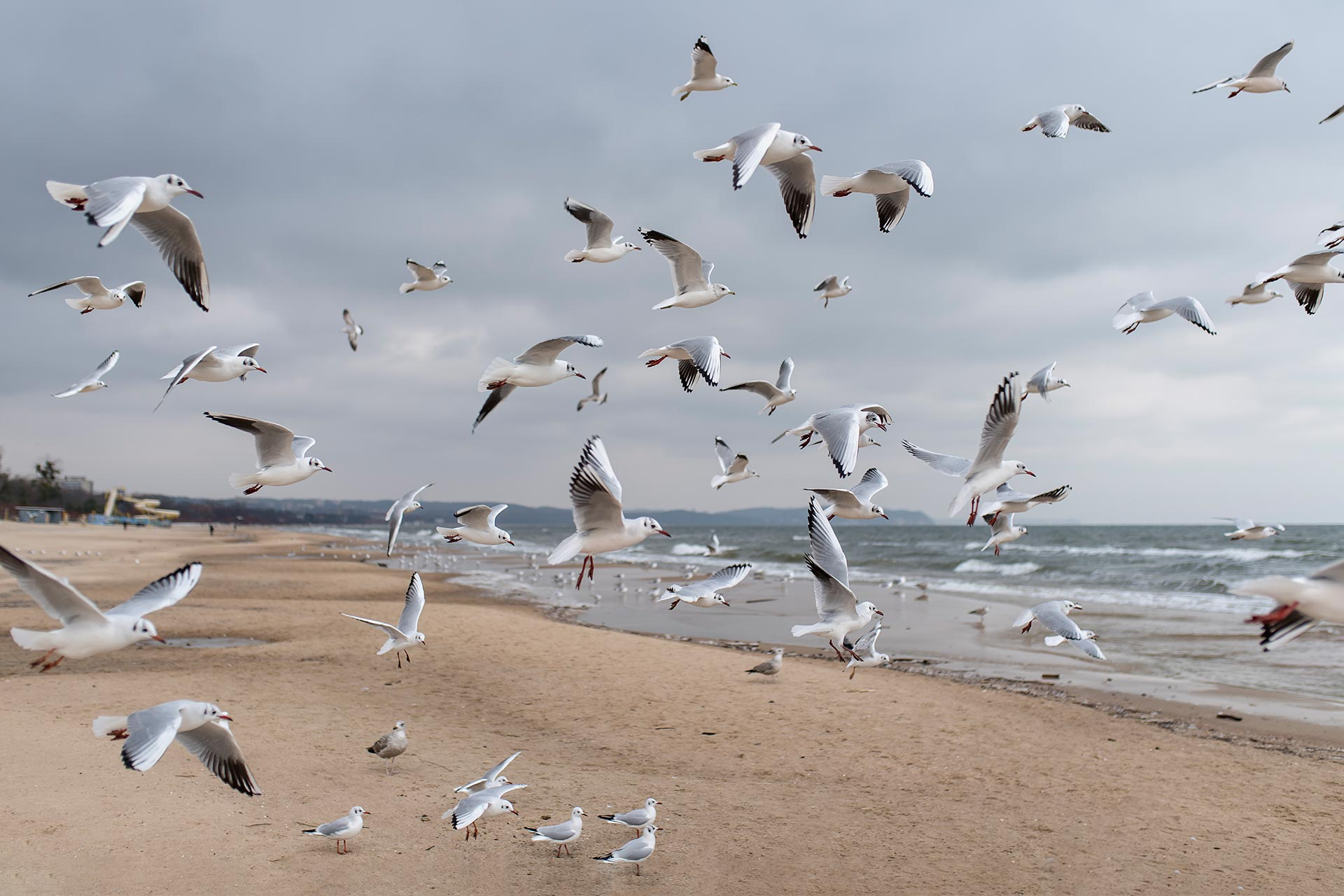 Maritime Landschaften Möwe Ostsee Wandbild Bild auf Leinwand Acrylglas Aludibond